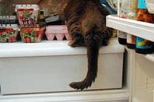 кот-воришка