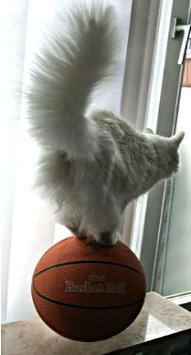 кот на мяче