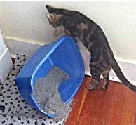 кот опрокинул лоток