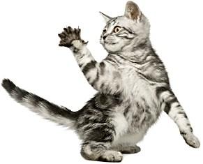 когти кошки