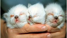 вирусная инфекция у котят