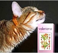 кошка и валерианка