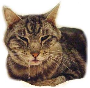 слюнотечение у кошки