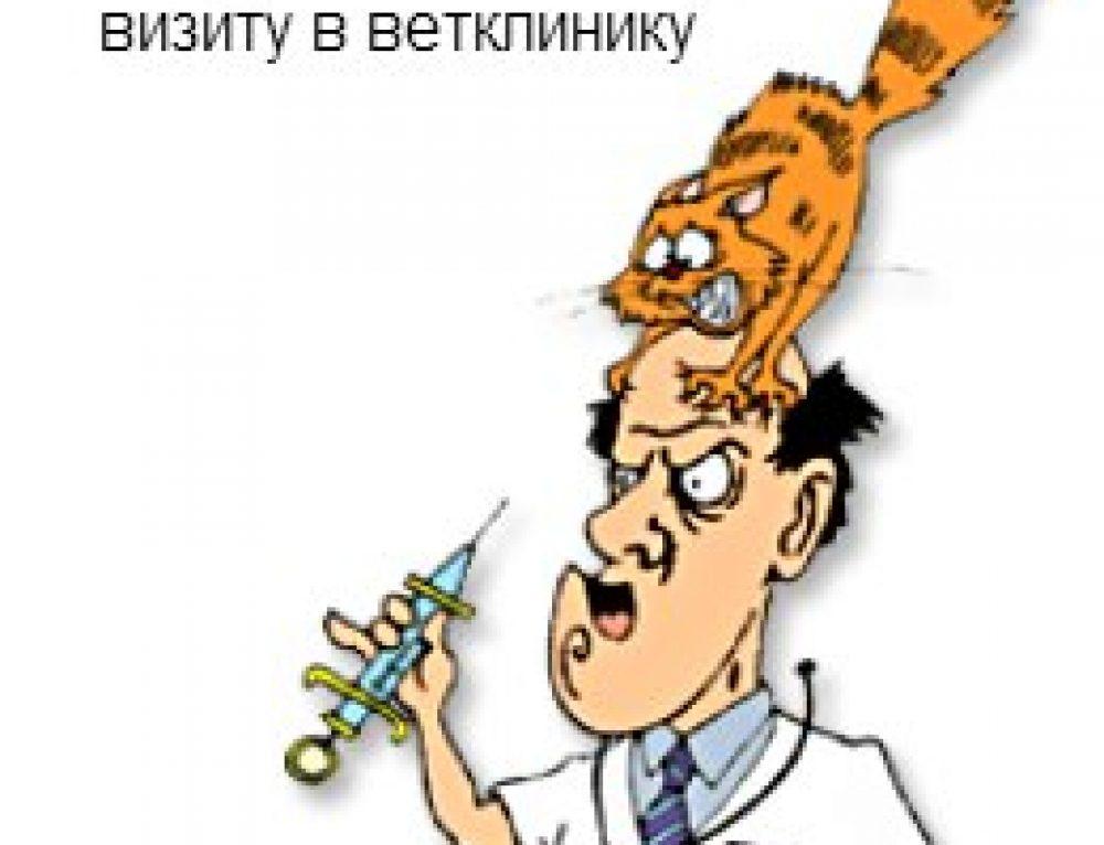 Как правильно лечить кошку -1