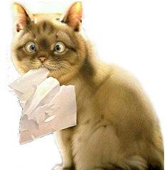 кот с туалетной бумагой