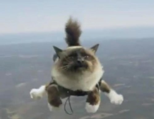 Кошка прыгает с парашюта