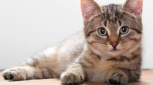 Признаки хорошего здоровья у кошки