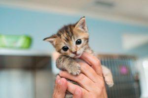 Здоровье Вашей кошки - в Ваших руках!