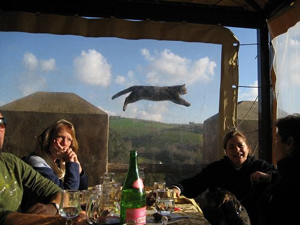 10 курьезных и очень смешных фото с котами
