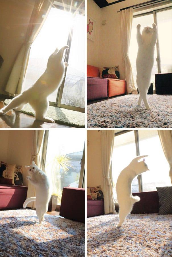 Почему Кошки Любят Солнце и Тепло