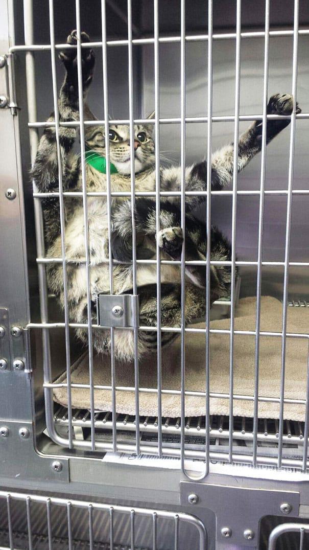 15 Смешных Кошек На Приёме у Ветеринара