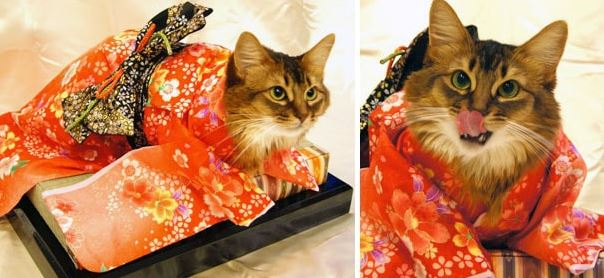 Кошки в кимоно