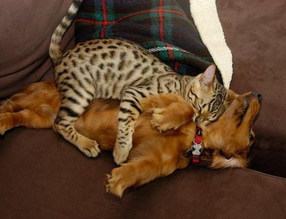 Кошки Спят На Собаках 21 фото