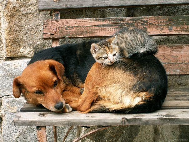 Кошки Спят На Собаках 21 фото ?