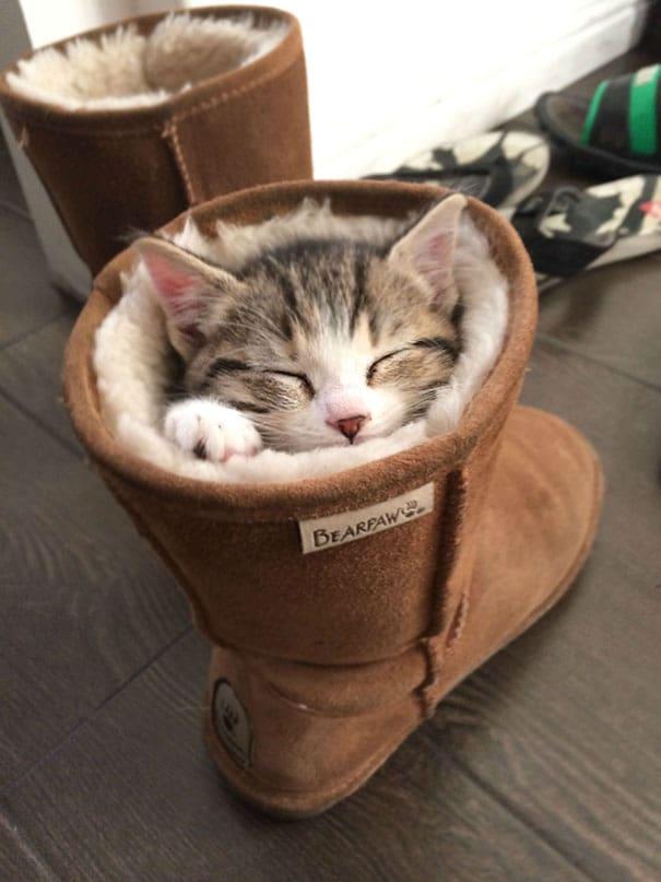 15 Кошек Спящих В Невероятных и Нелепых Позах ?