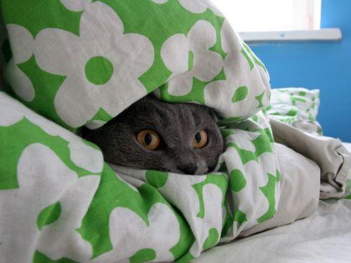 15 Любопытных и Курьёзных Кошек