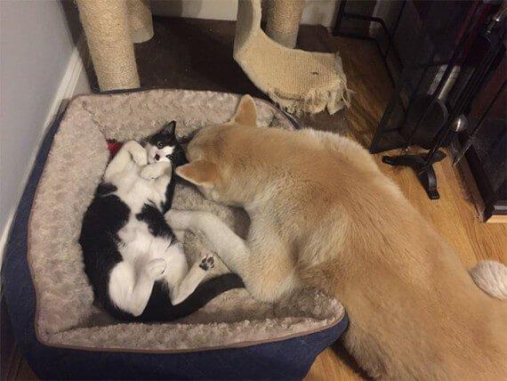 15 Кошек Которые Забрали Спальные Места у Собак