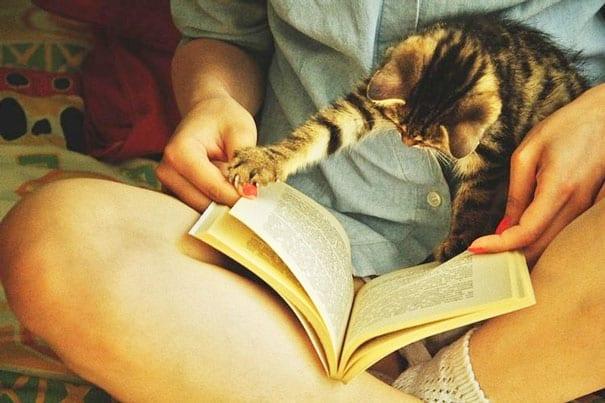 15 Кошек Мешающих Читать ?