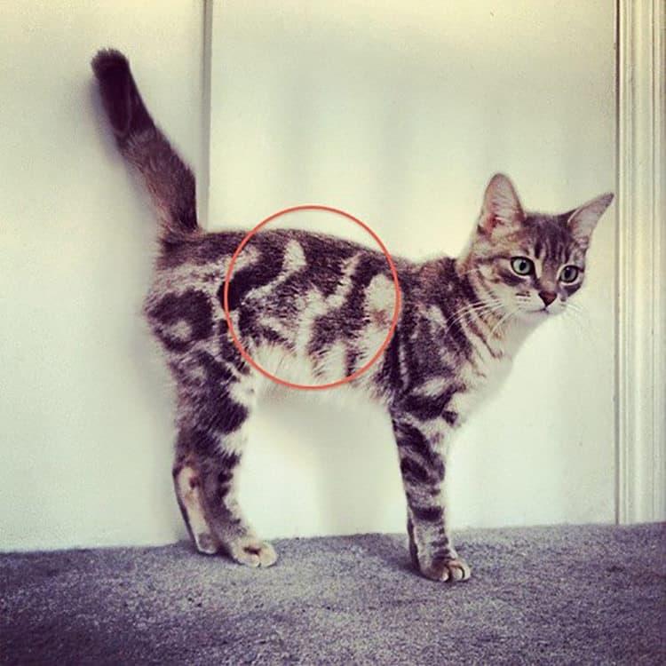 Кошки и коты с уникальными окрасами