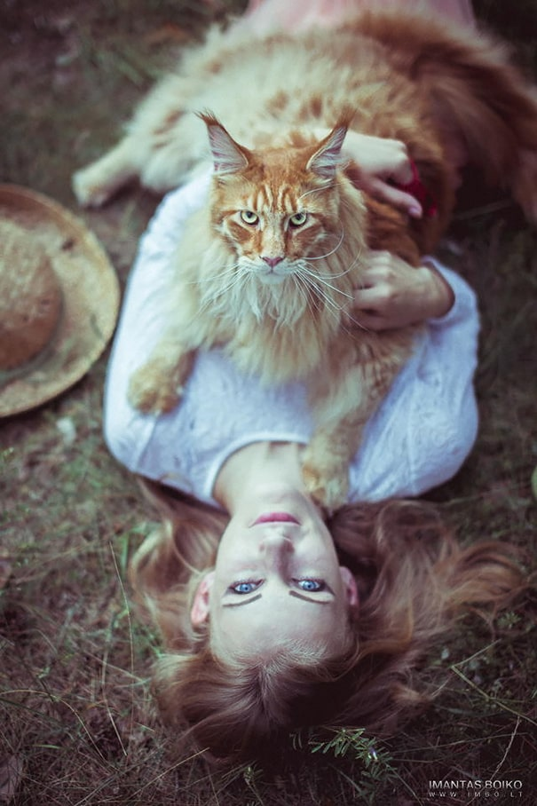 16 Великолепных Мейн-Кун Котов ?
