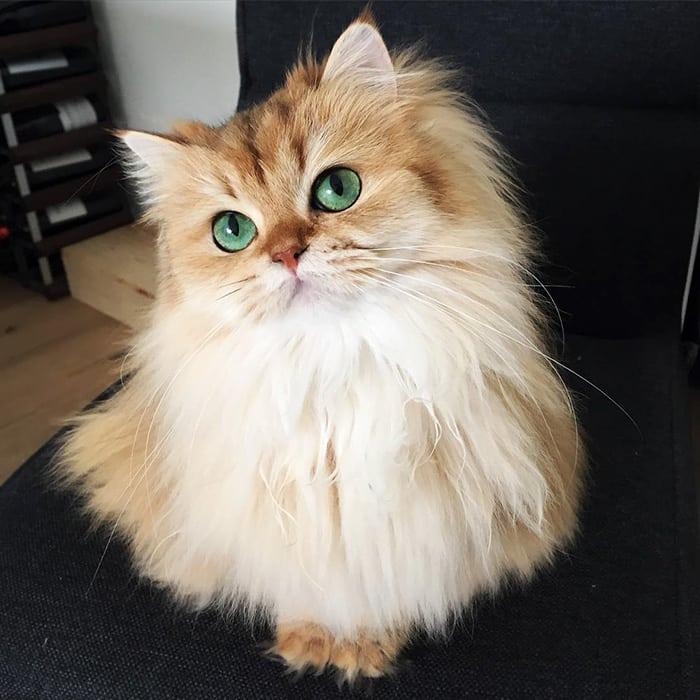10 самых красивых кошек в мире