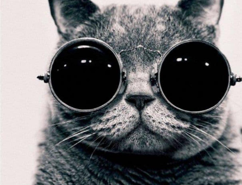 20 Самых Известных Кошек в Интернете 😻