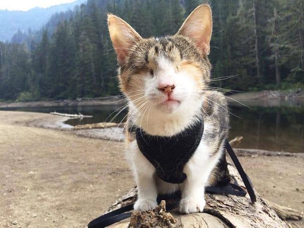 20 Самых Известных Кошек в Интернете ?
