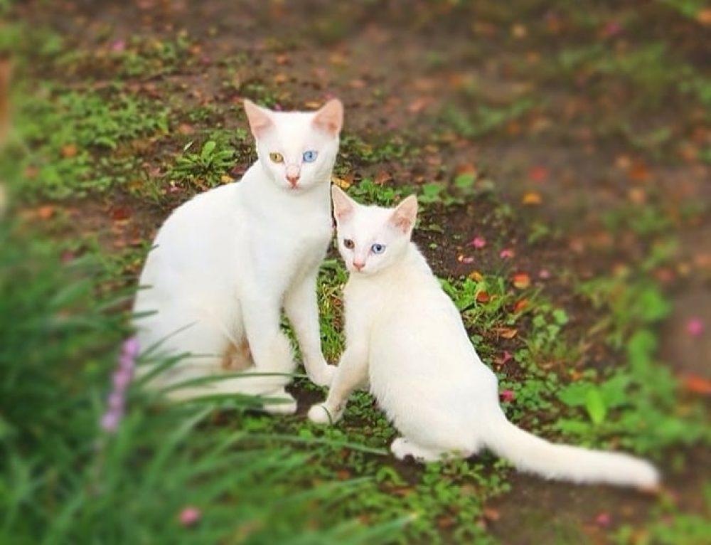 10 Кошек-Мам с Их Котятами-Копиями 😻