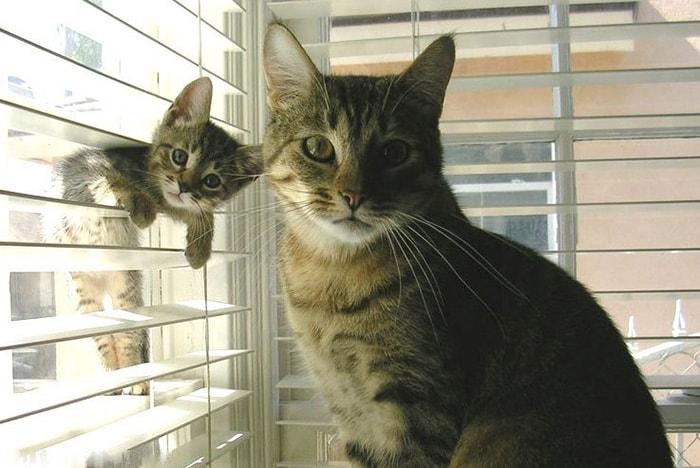 10 Кошек-Мам с Их Котятами-Копиями ?