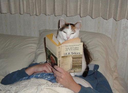 16 кошек игнорирующих личное пространство