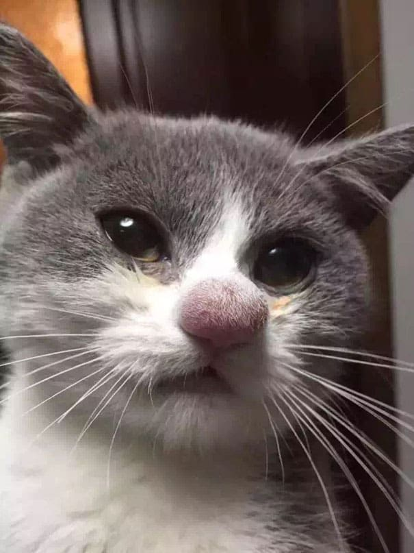 10 Кошек Укушенных Пчёлами