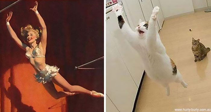 20 Кошек позирующих как Пин-ап девушки