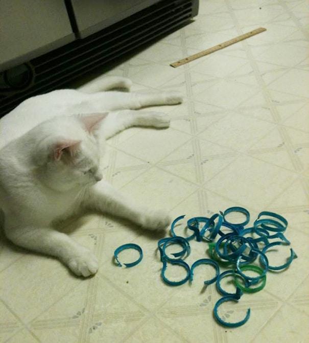 Кошки и Коты - Клептоманы ?