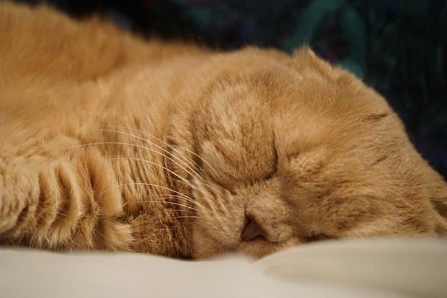 15 Смешных Спящих Кошек