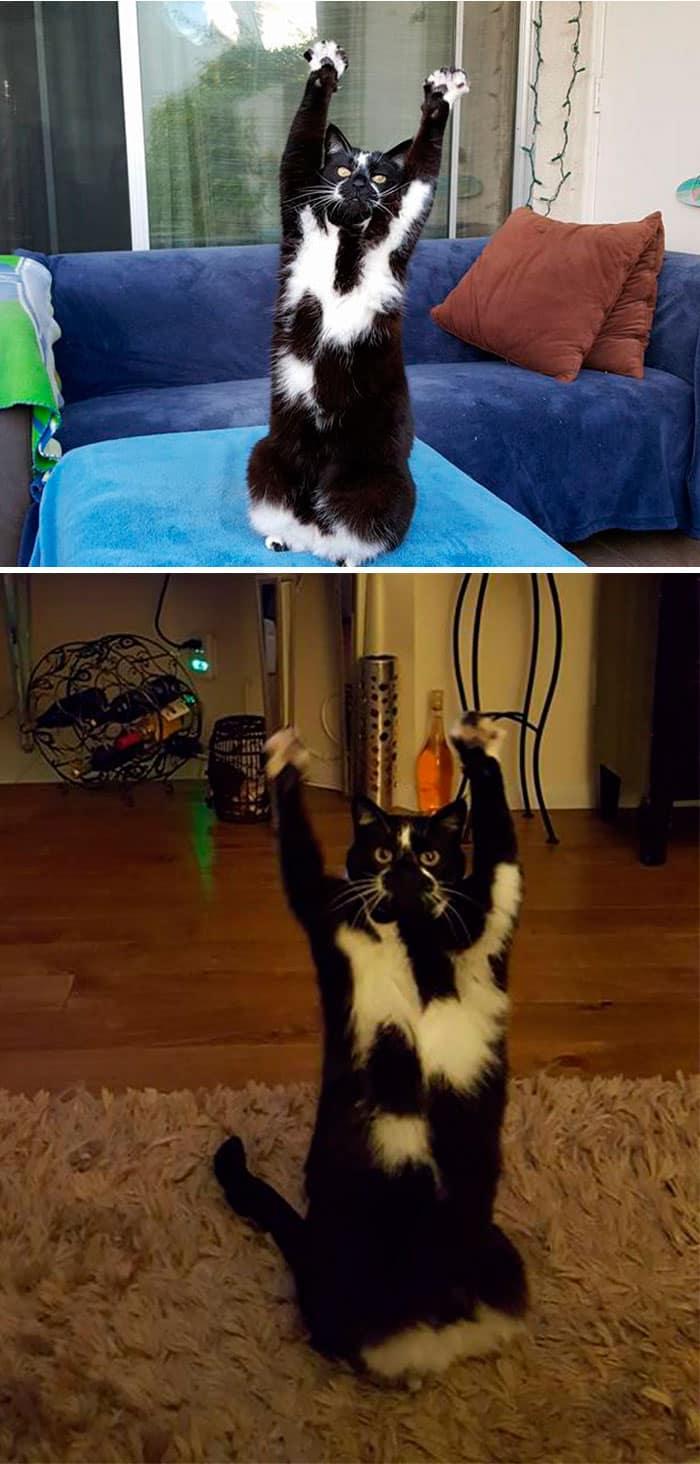 10 Очень Странных Кошек