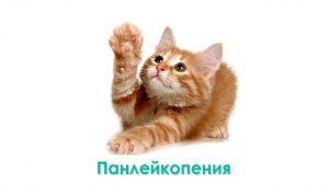 Кошачья Чумка (Панлейкопения)