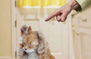 Дрессируем кошку. Или наоборот ?