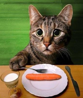 Почему кошка всегда голодная?