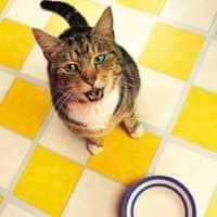 Почему кошка всегда голодная