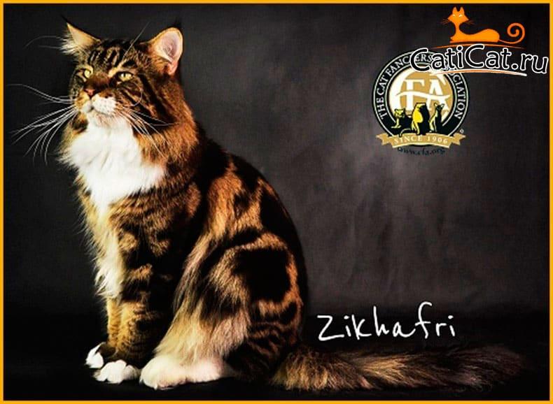 2-й лучший кот- (Международный регион) 2017-2018 г