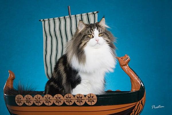викинки и кошки